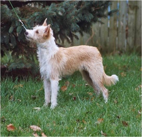 ... small non shedding dog breeds family dog breeds extra large dog breeds